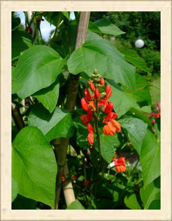 jankas garten im august 2013. Black Bedroom Furniture Sets. Home Design Ideas